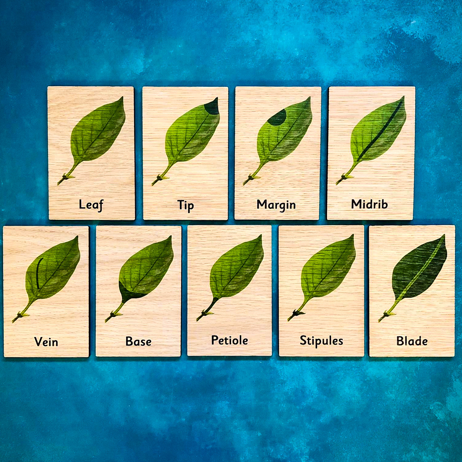 Montessori Inspired Wooden Learning Tiles - Parts of a Leaf