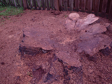 Remaining stump to be removed
