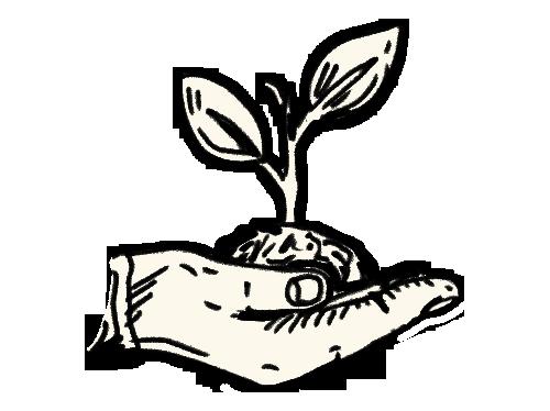 Illustration of plant growing
