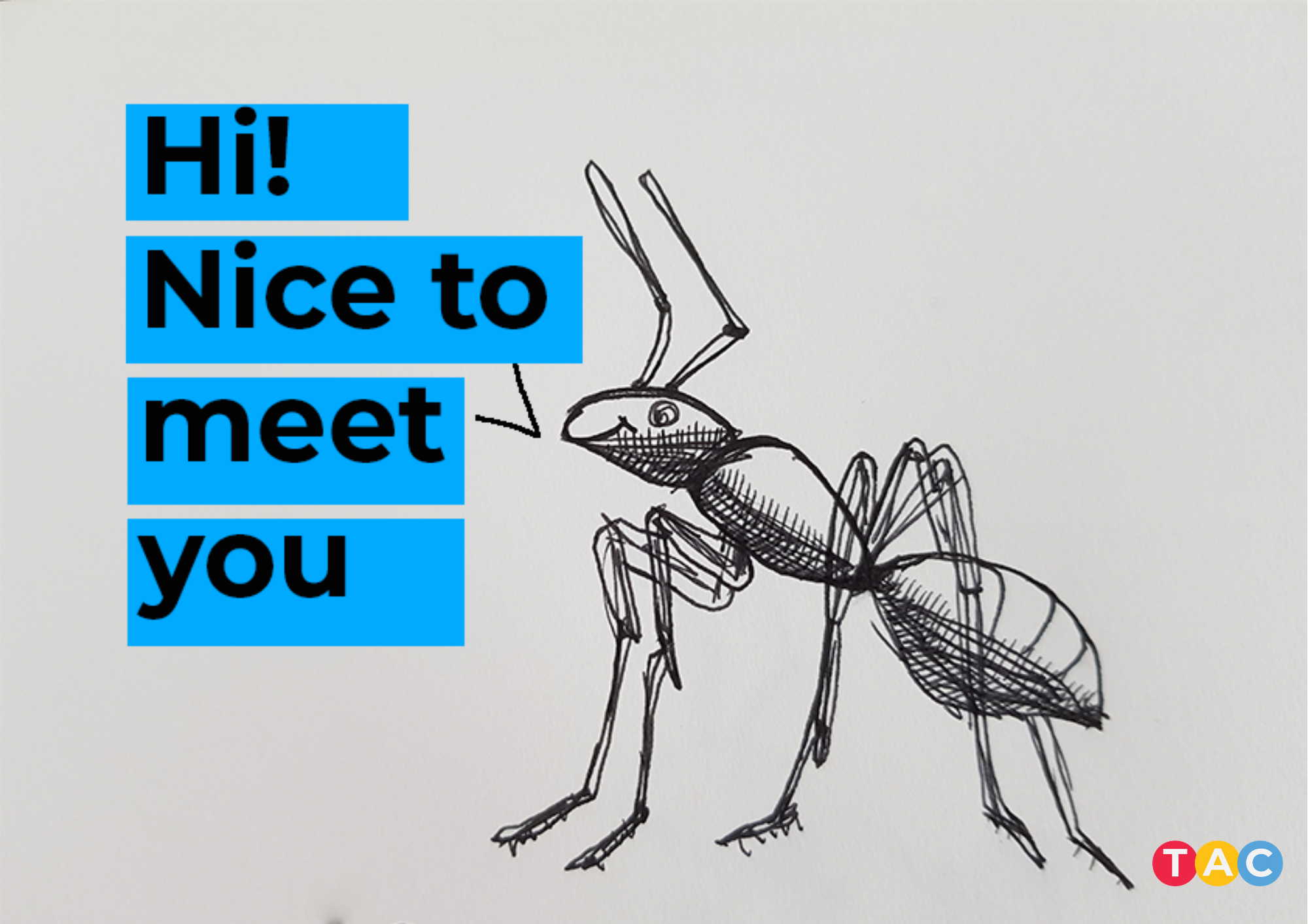 What do both content and ants have in common?