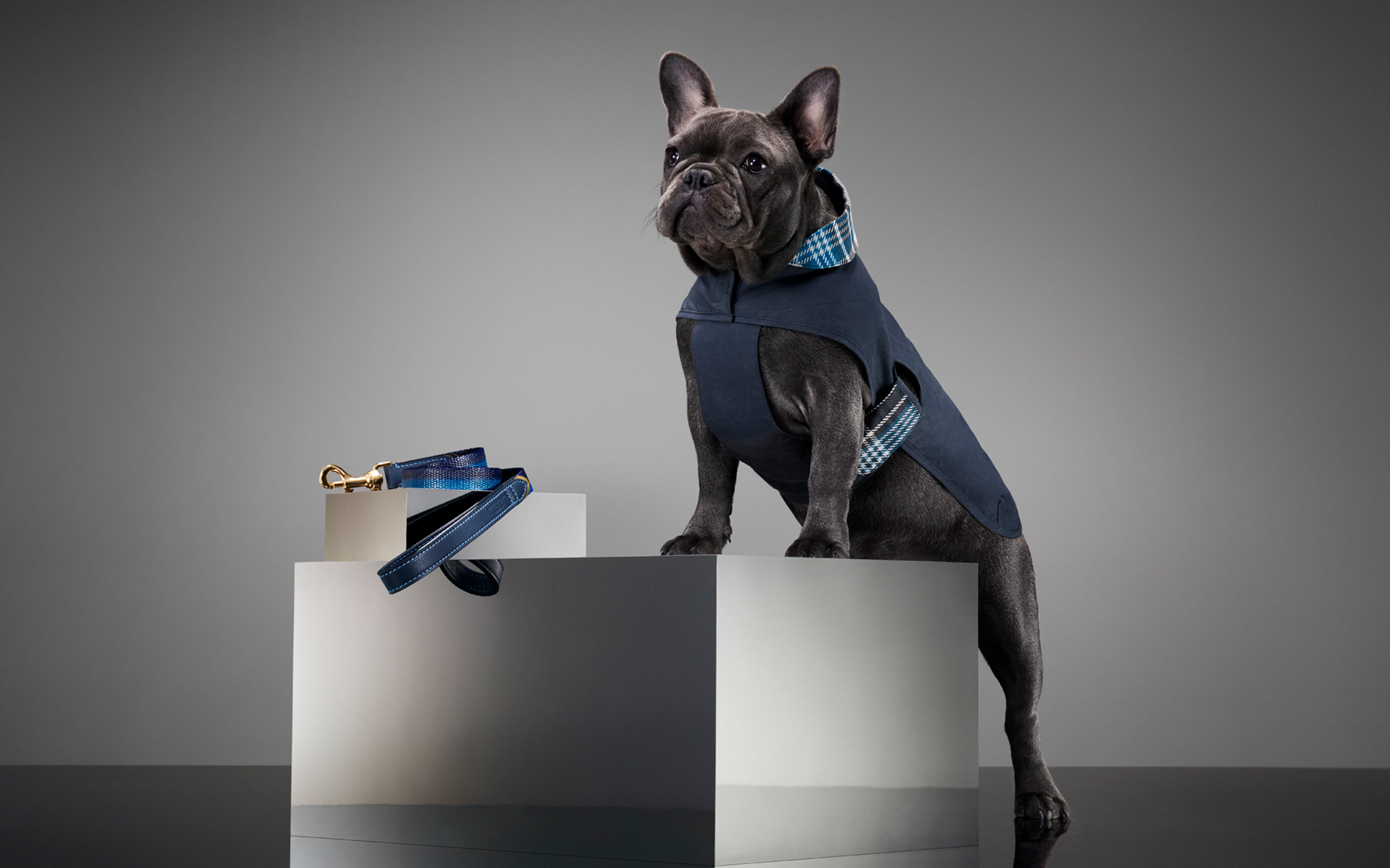 creative commercial photography of a pug standing on a grey box