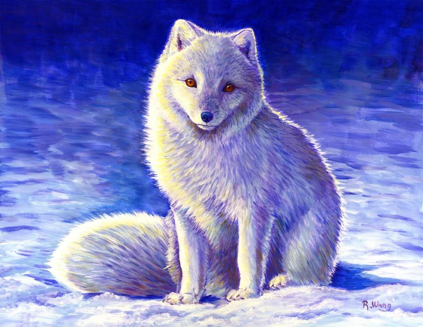 Peaceful Winter Arctic Fox