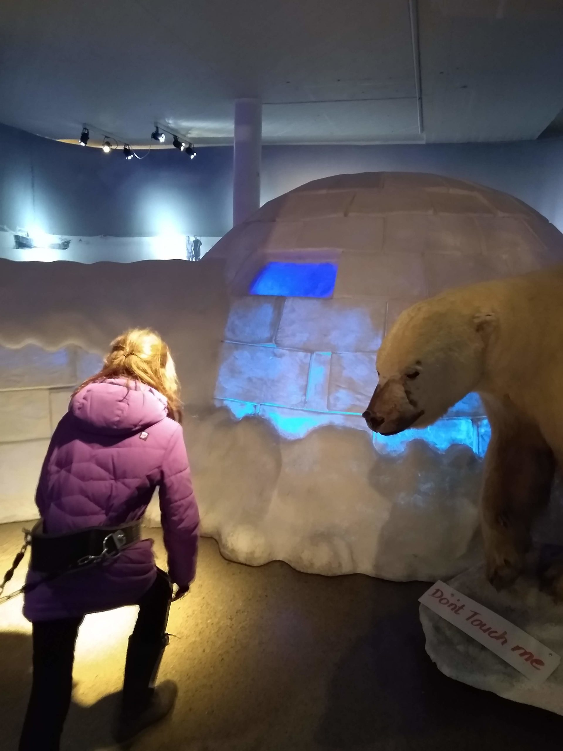 child studies polar bear and igloo in museum