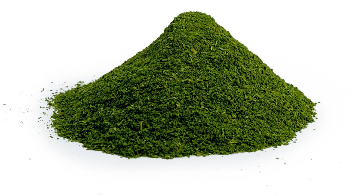 A mound of pure leaf moringa powder.