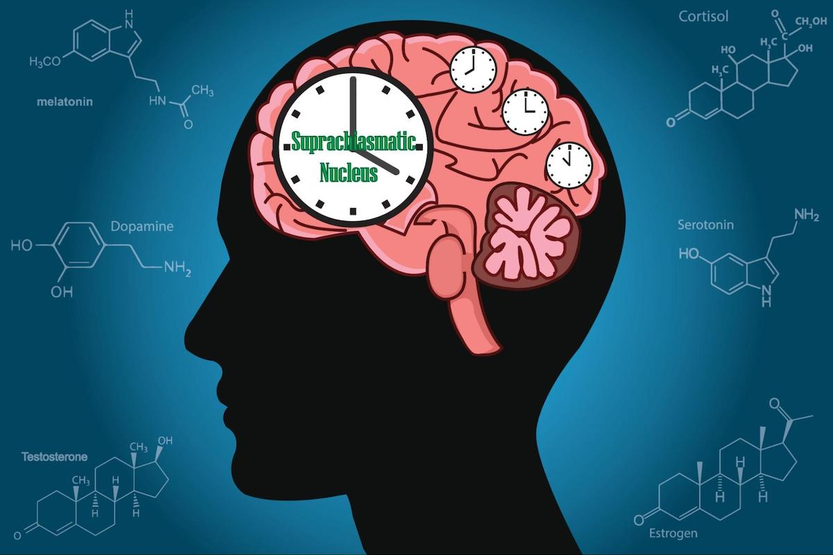 illustration of the human brain with clocks in it