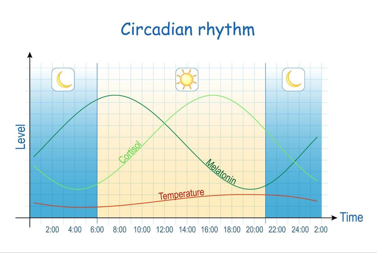circadian rhythm disorder: graph