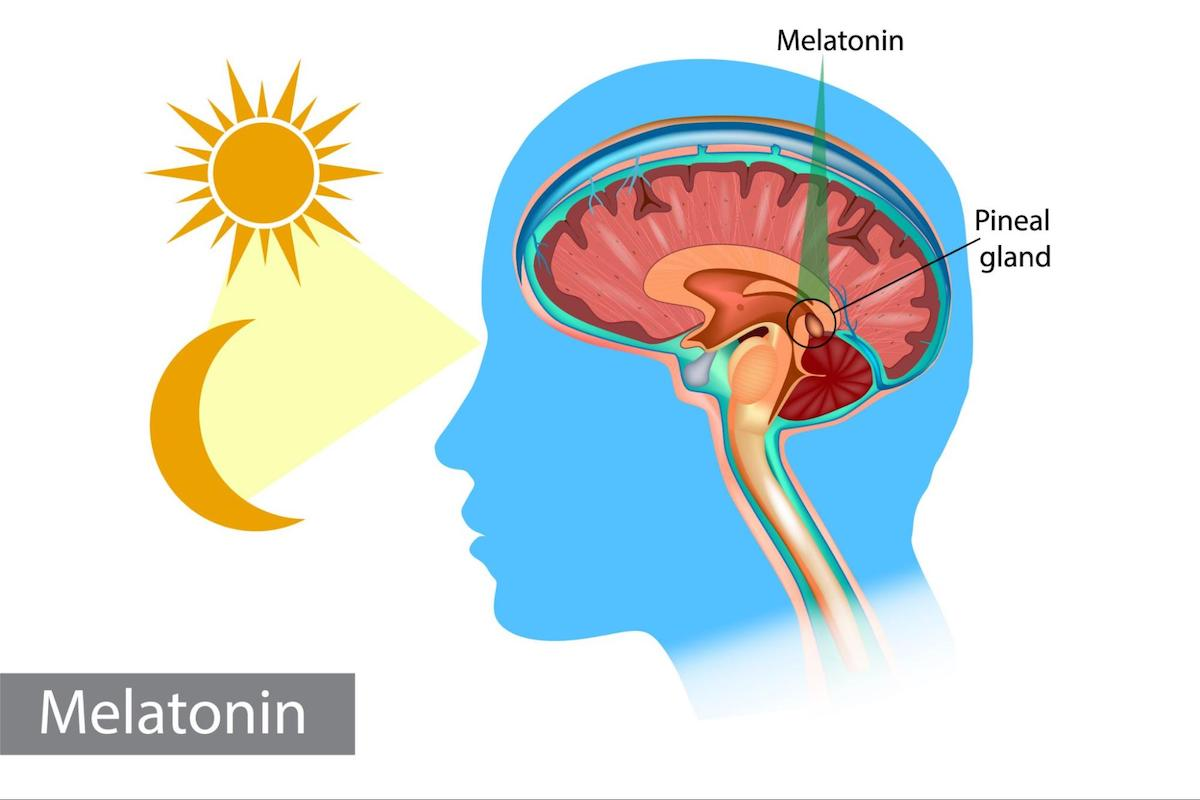 How to fall asleep faster: melatonin and pineal gland illustration