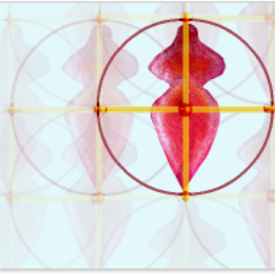 Bild für Link zum Kaiserschnitt Netzwerk der Ärztin Katrin Mikolitch - von der Website Holger Menzel - Osteopathie in Neustadt an der Weinstraße