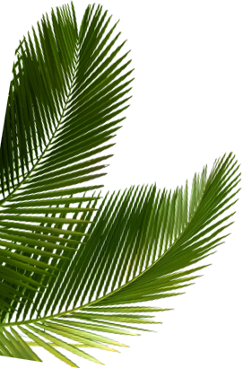 Image of a palm