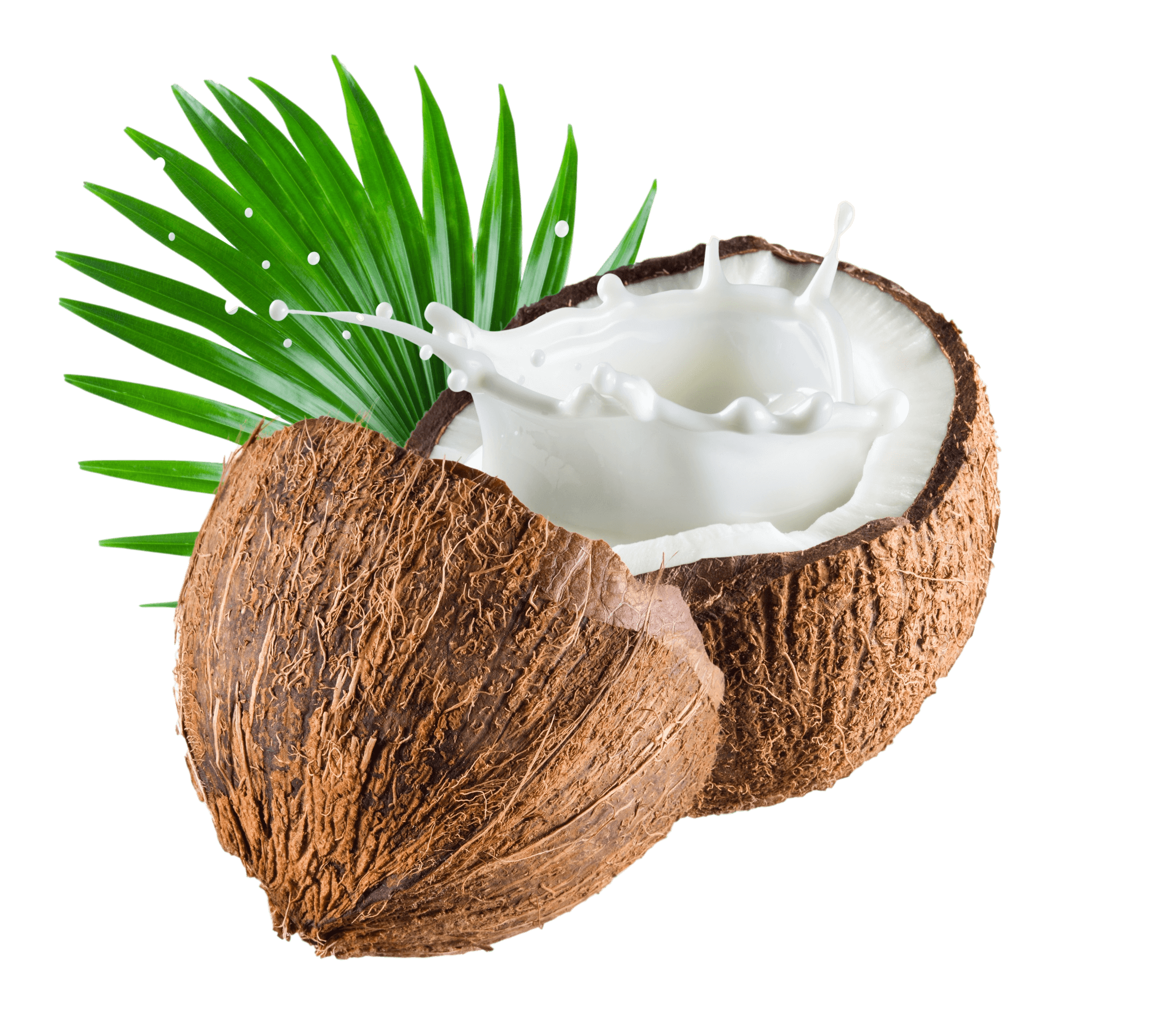 Image of a coconut