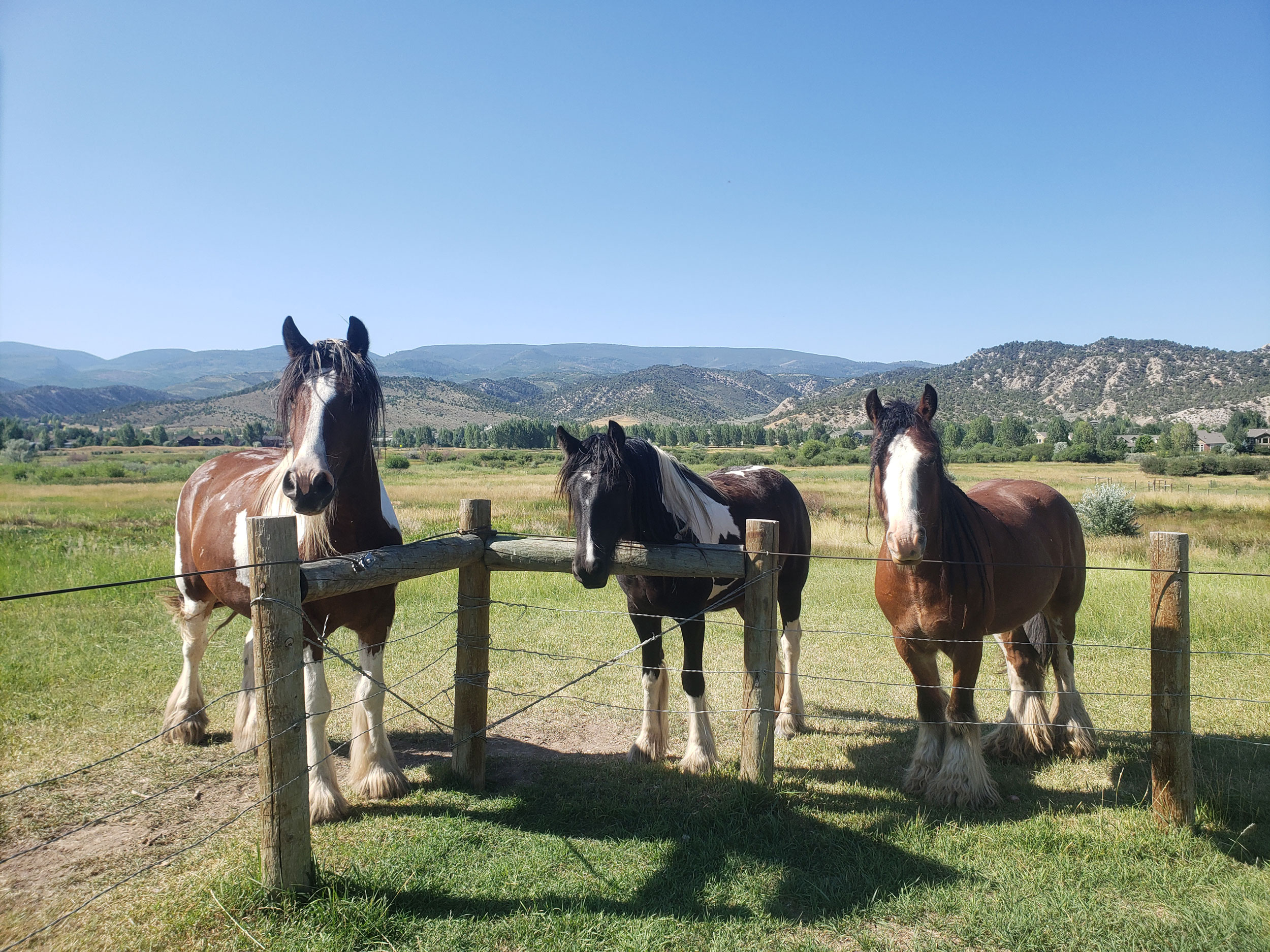 Horses at th fence