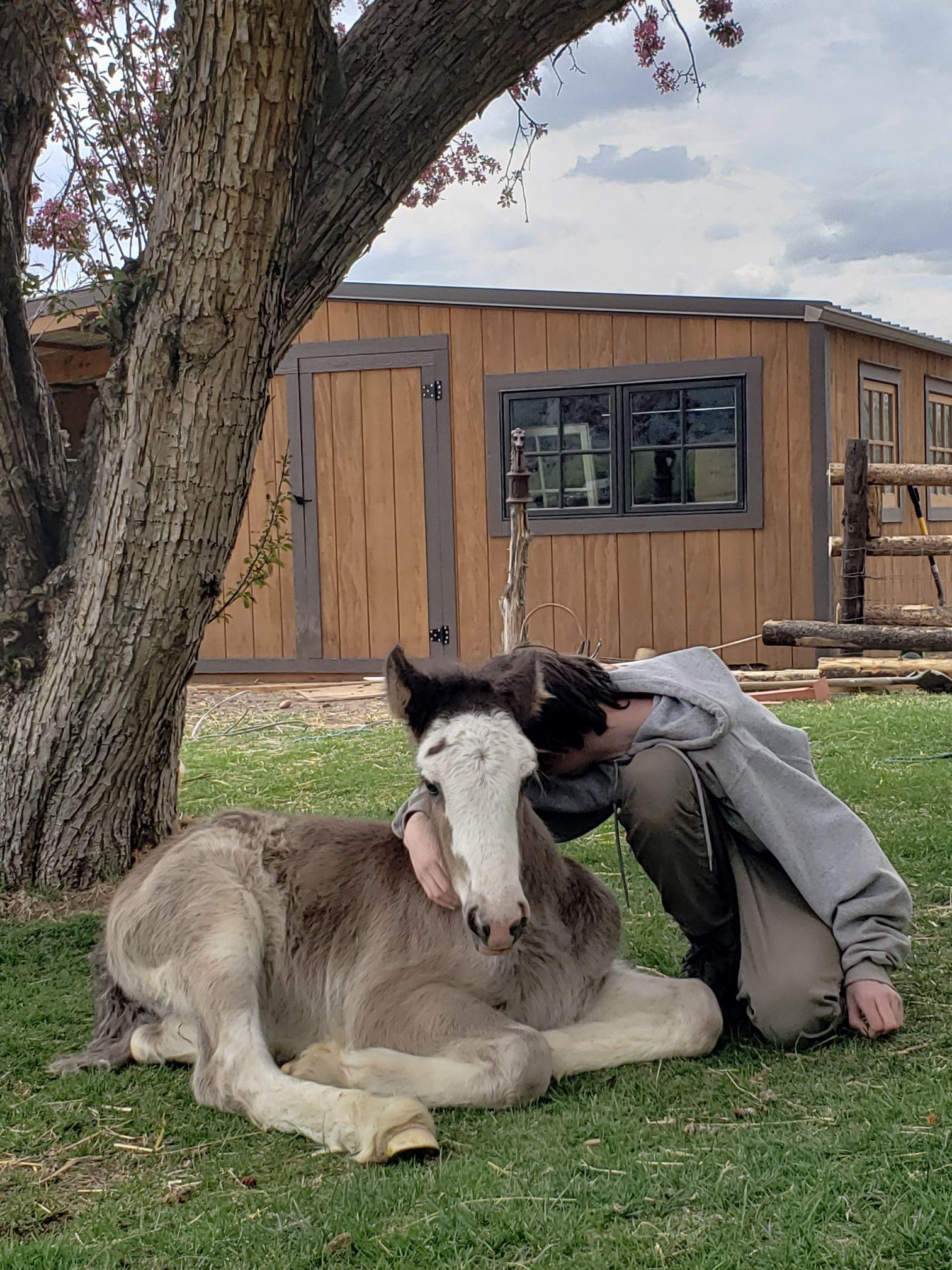 Horse Cuddles