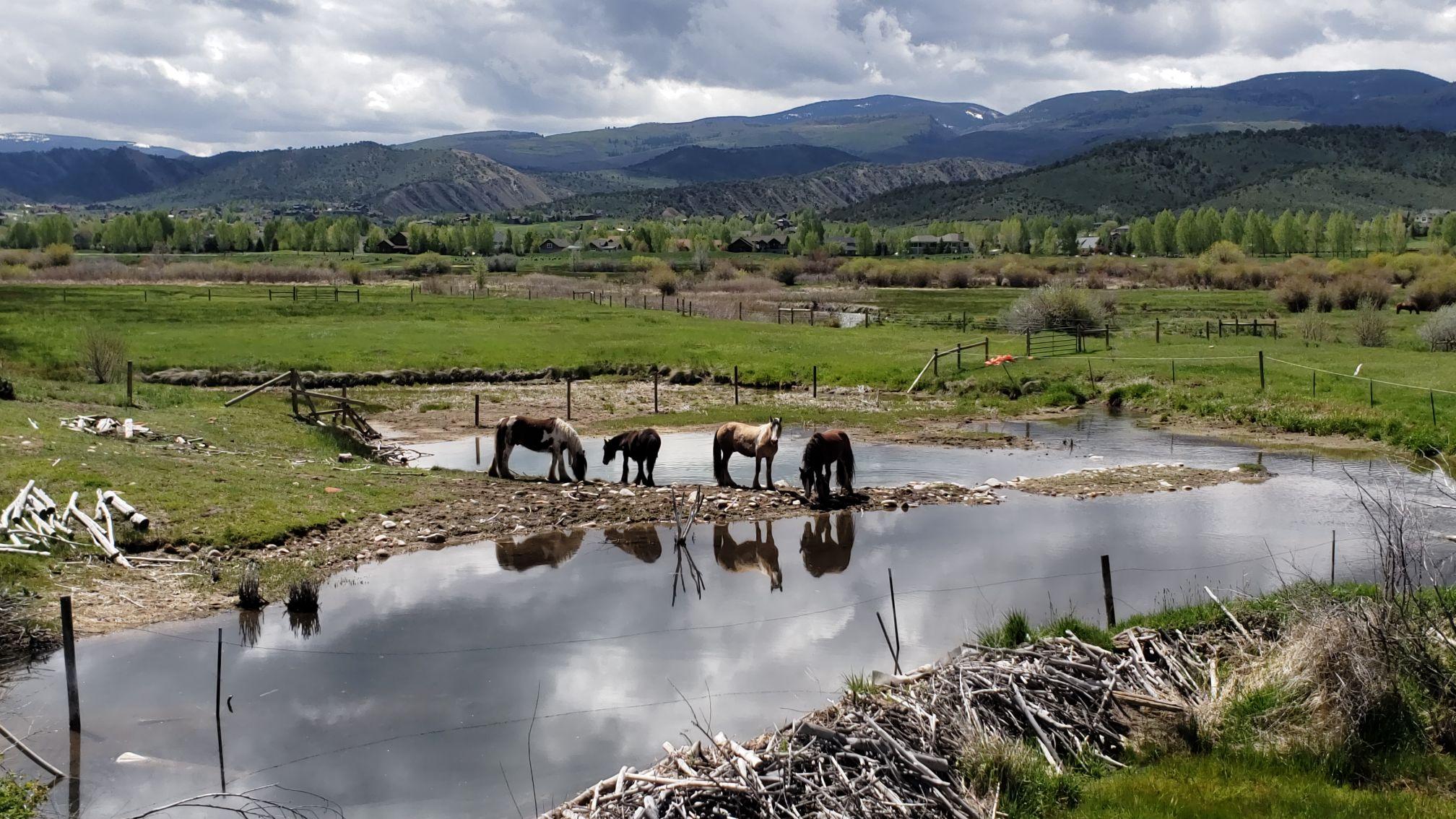 Horses near water