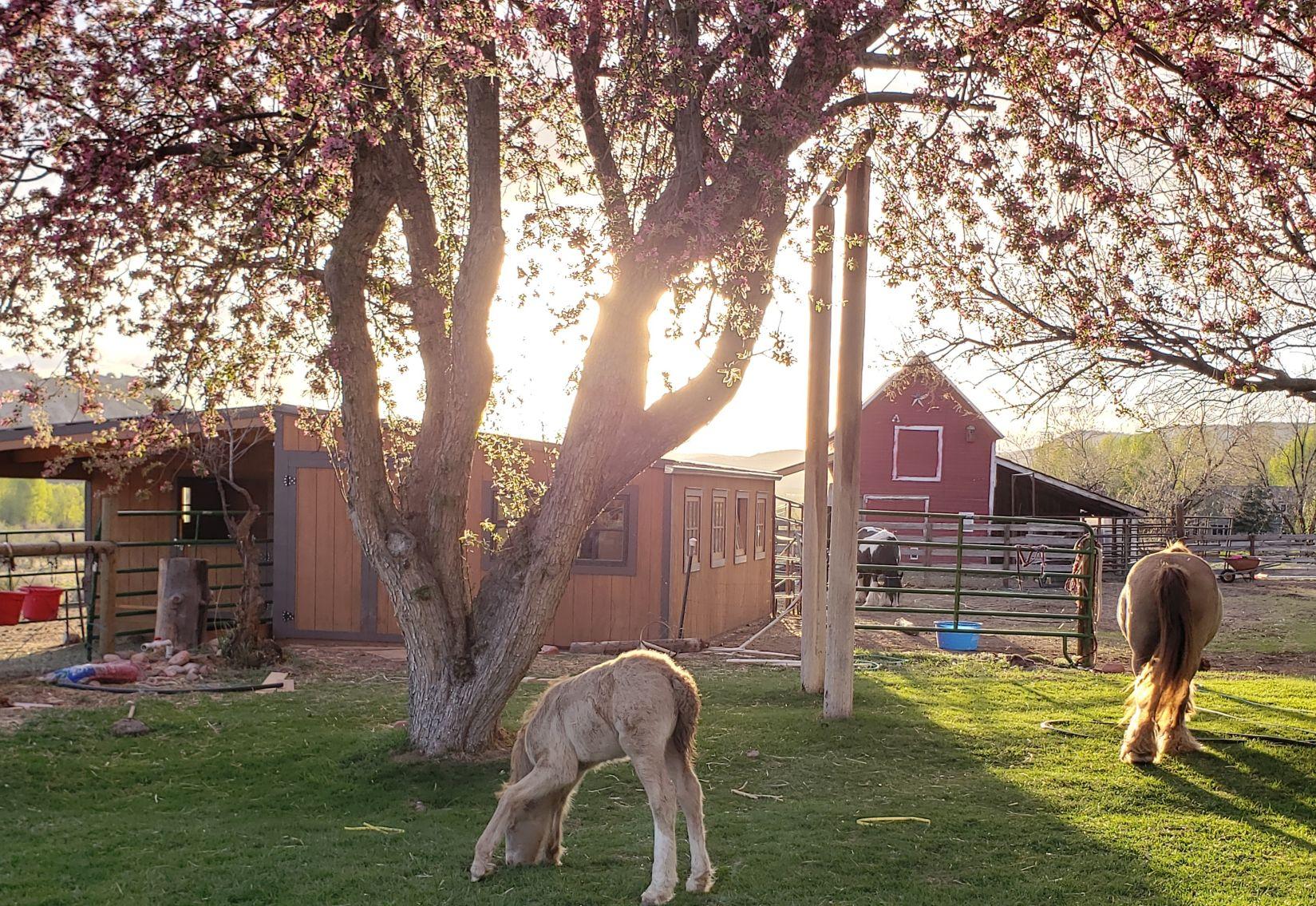 Horses near barn