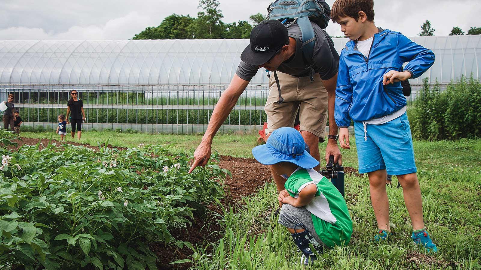 Camp leader and children picking vegetables at farm