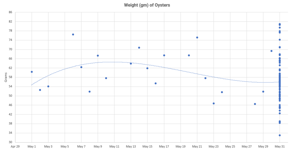 one oyster weight was recorded each work day in May. 79 oyster weights were recorded on may 31.