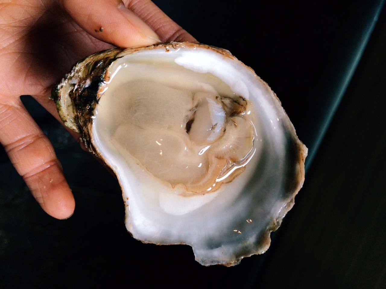 summerside oyster