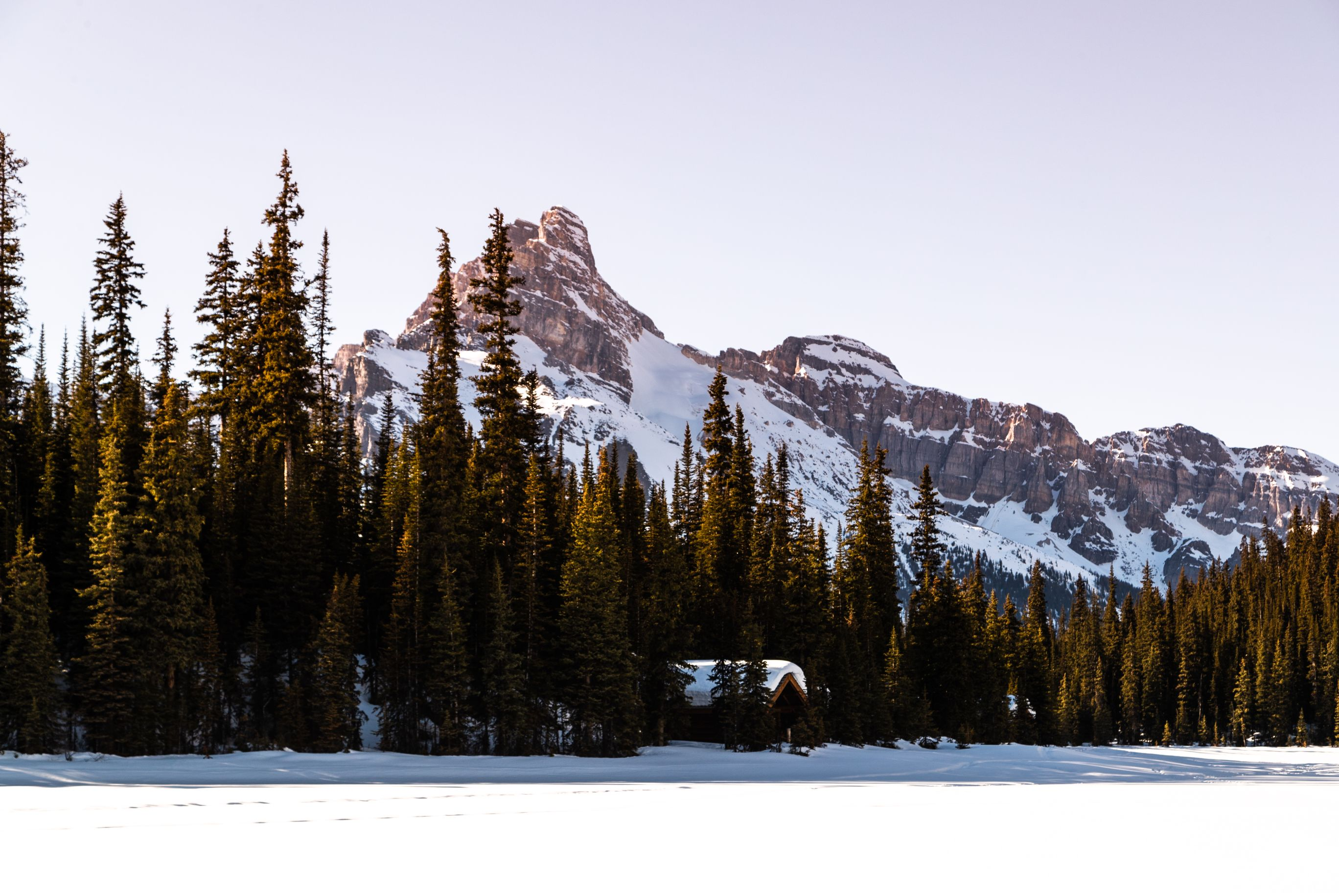 Snowy log cabin poking through evergreens