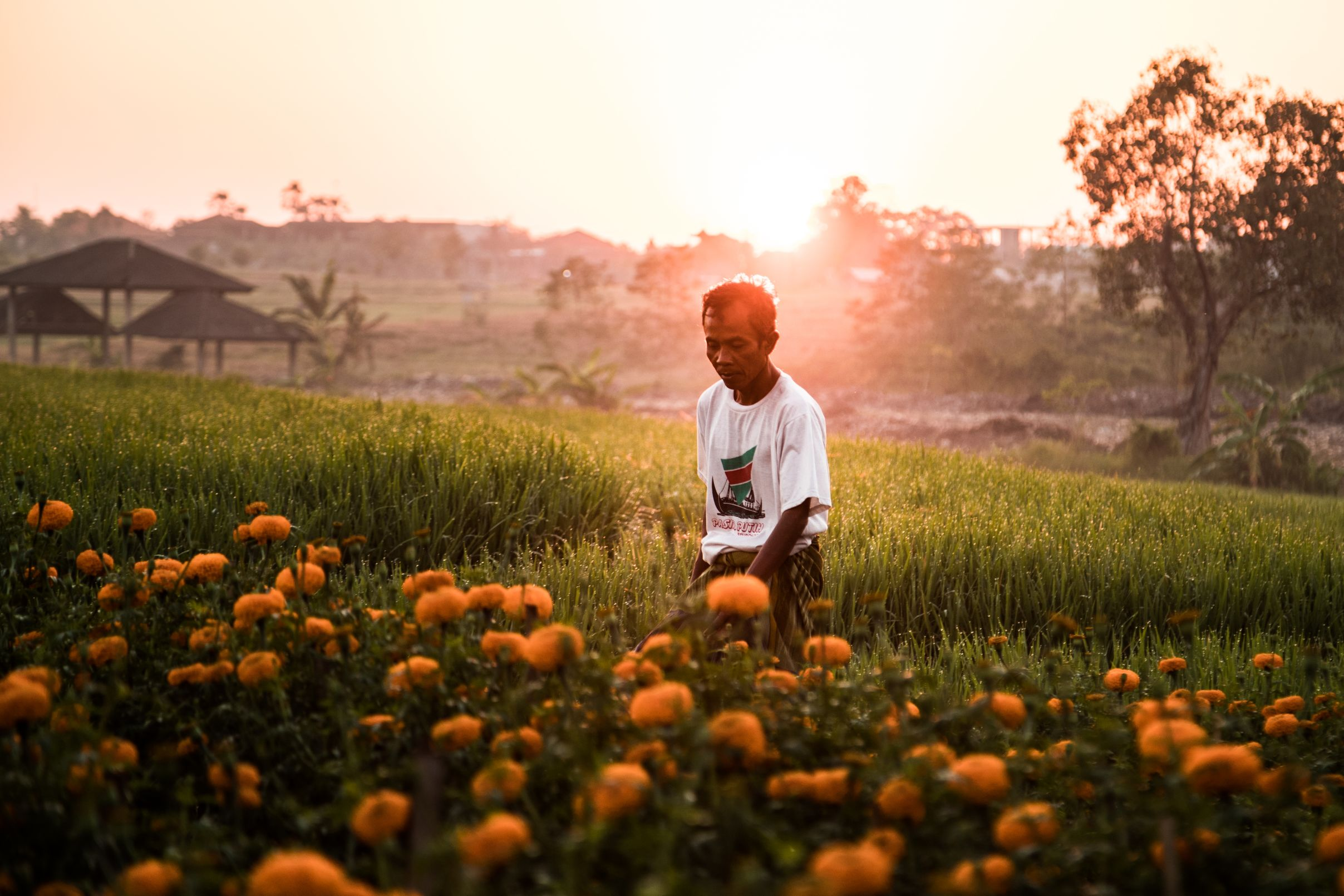 Man standing in balinese rice field during at sunset.