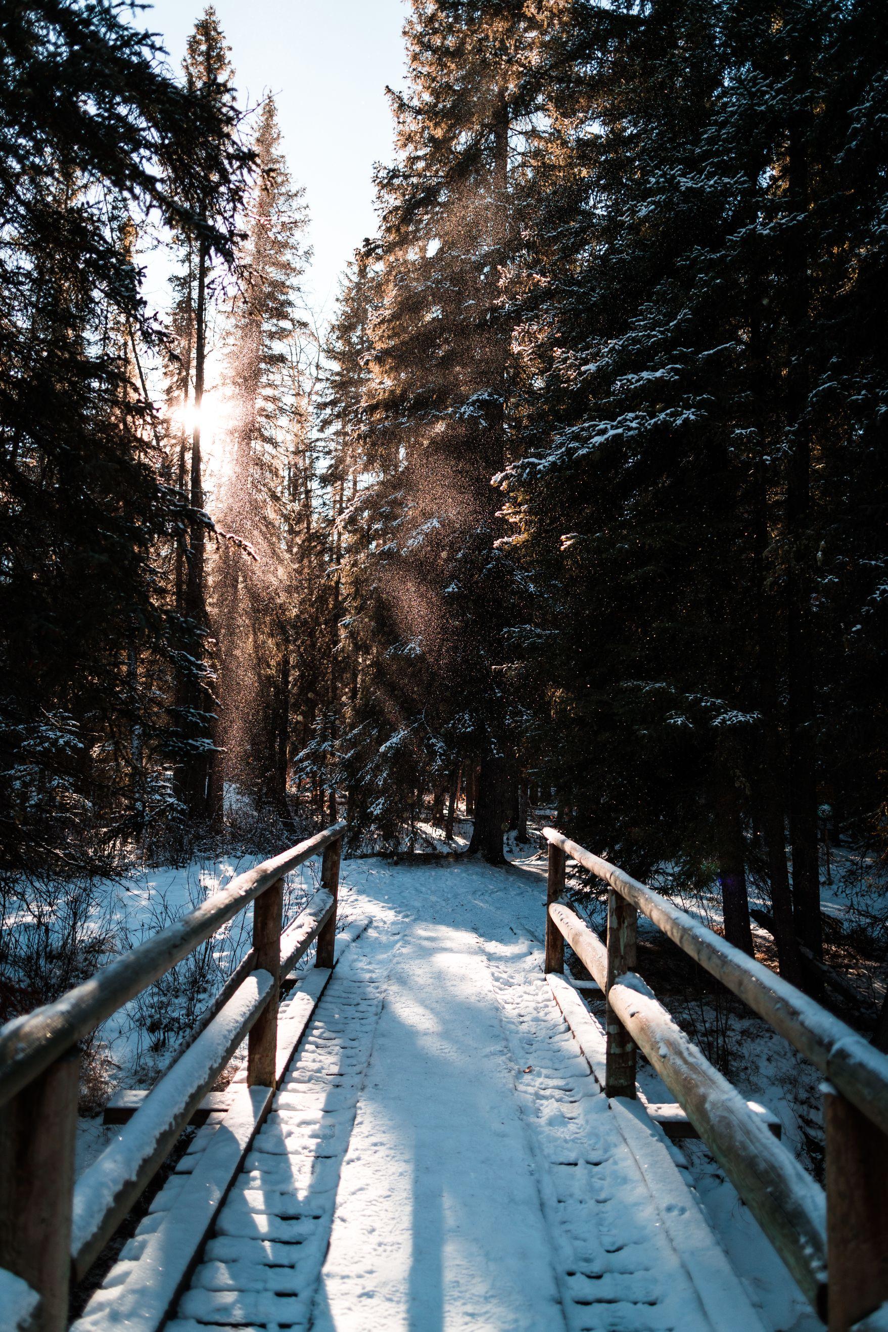Snowy bridge into forest.