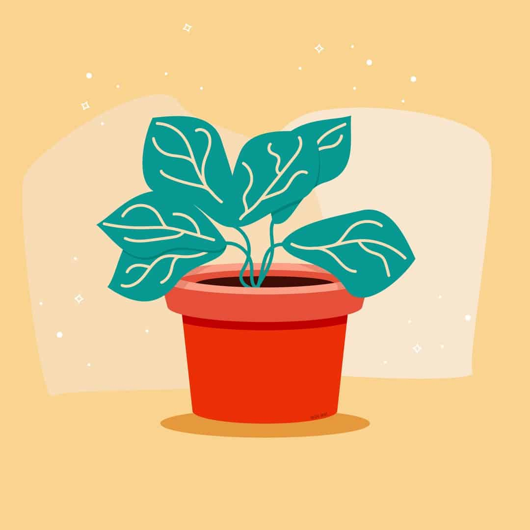 Potted Plant Illustration Flat Design