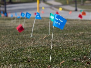 Utility Flag Markers in Grass