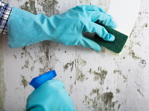 Gloves Hands Using Cleaning Spray and Sponge to Wipe Dirty Wall