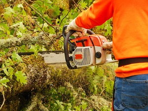 Man wearing bright orange sweatshirt using a chainsaw to cut wood in an outdoor wooded area.