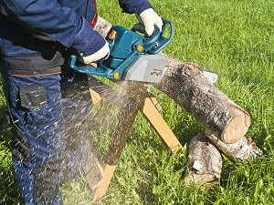 Worker wearing work clothes and gloves is using a chainsaw to cut larger logs into smaller pieces.