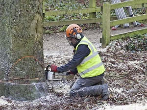 Worker wearing gloves, hearing protection, hardhat, face shield and safety vest, kneeling on the ground using a chainsaw to cut down a large tree.