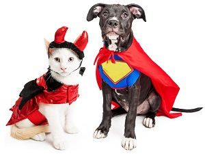 A dog and a cat dressed in Halloween costumes.