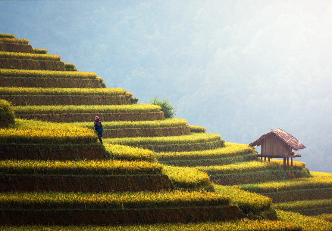 The majestic rice fields of Bhutan