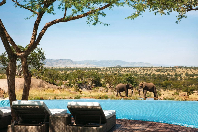 Two elephants are seen across the pool at the Four Seasons Safari Lodge, Serengeti