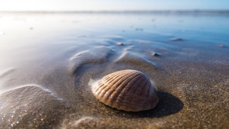 shell違い・・・