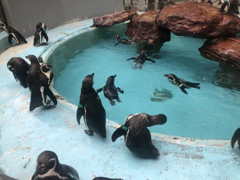 ペンギンの大群ー
