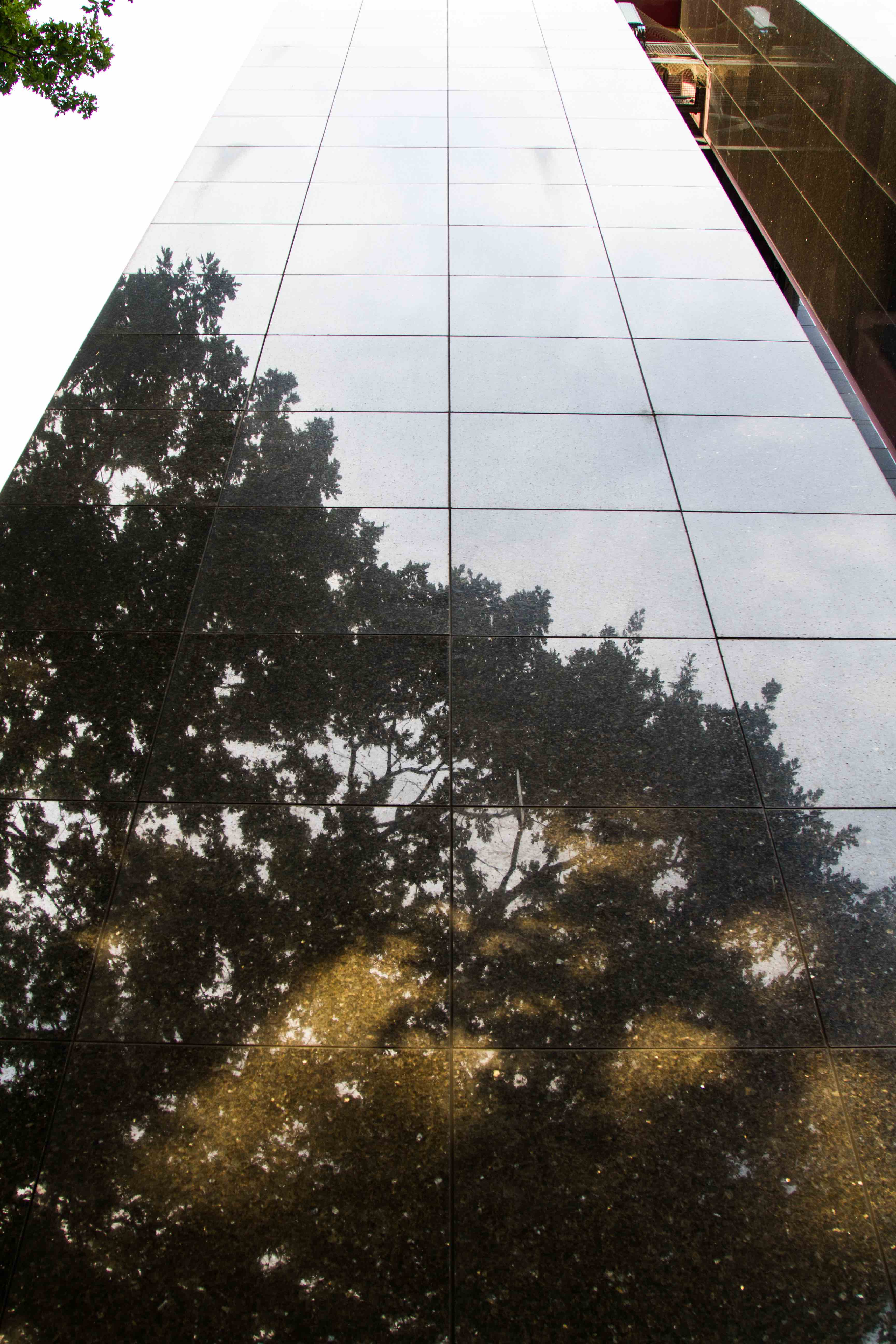 High wall with reflections of trees.