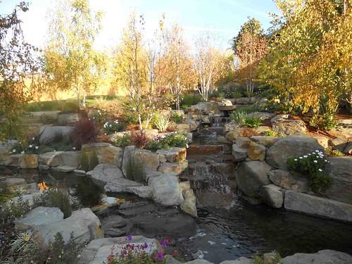 Residential Koi Pond