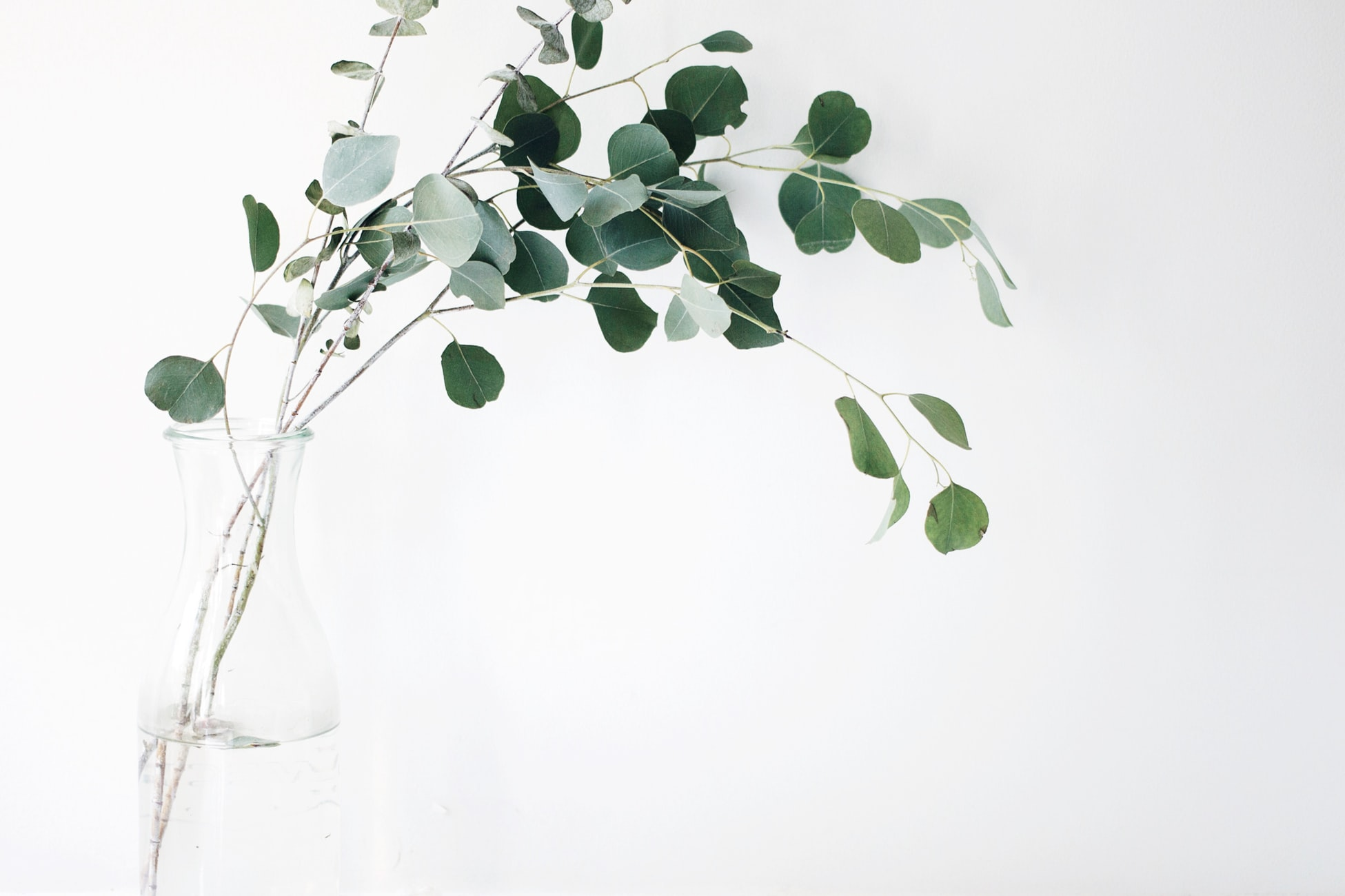 Elegant photo of flower stems and green leaves emerging from watering vase