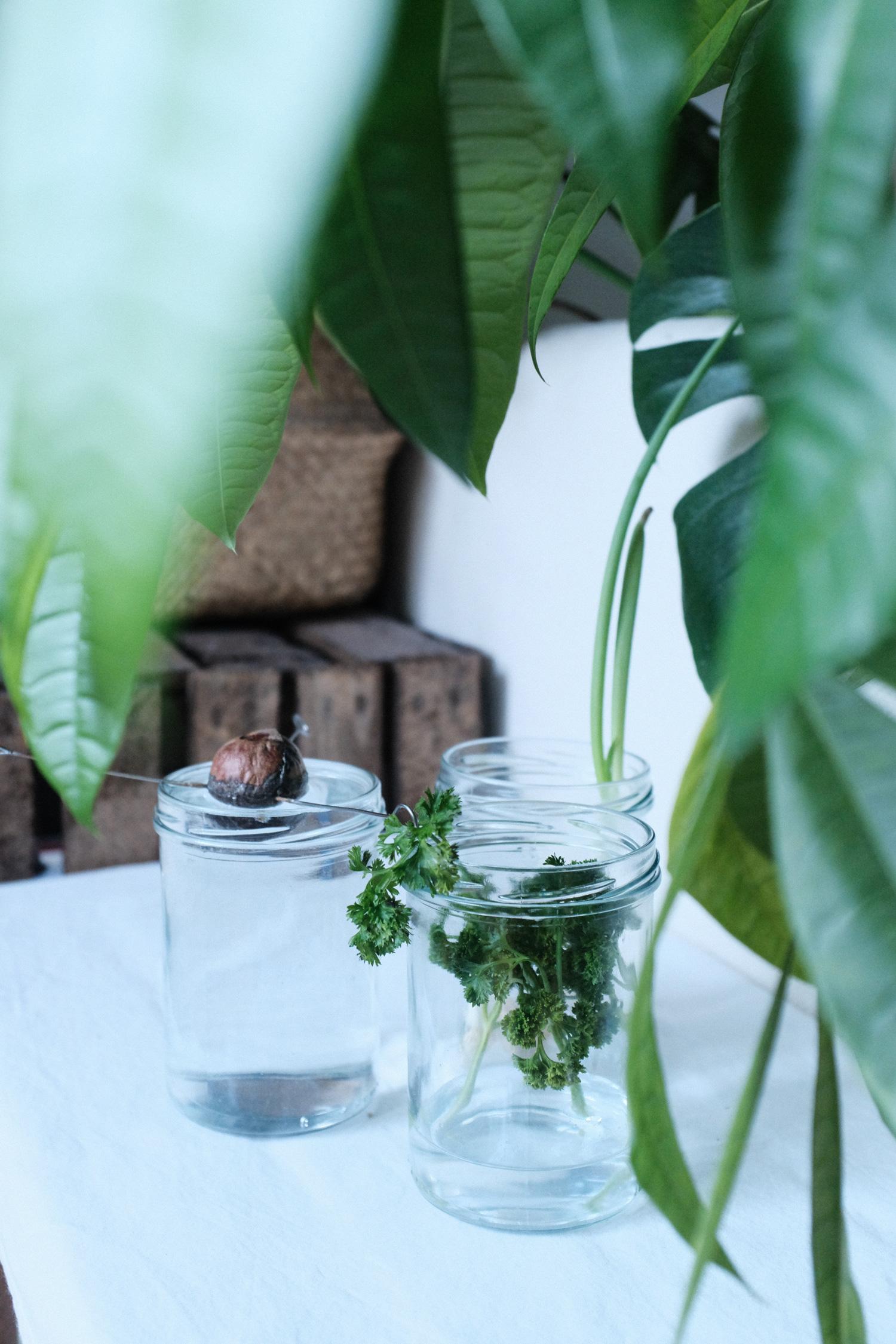 Completeorganics Upcycling Sproesslinge