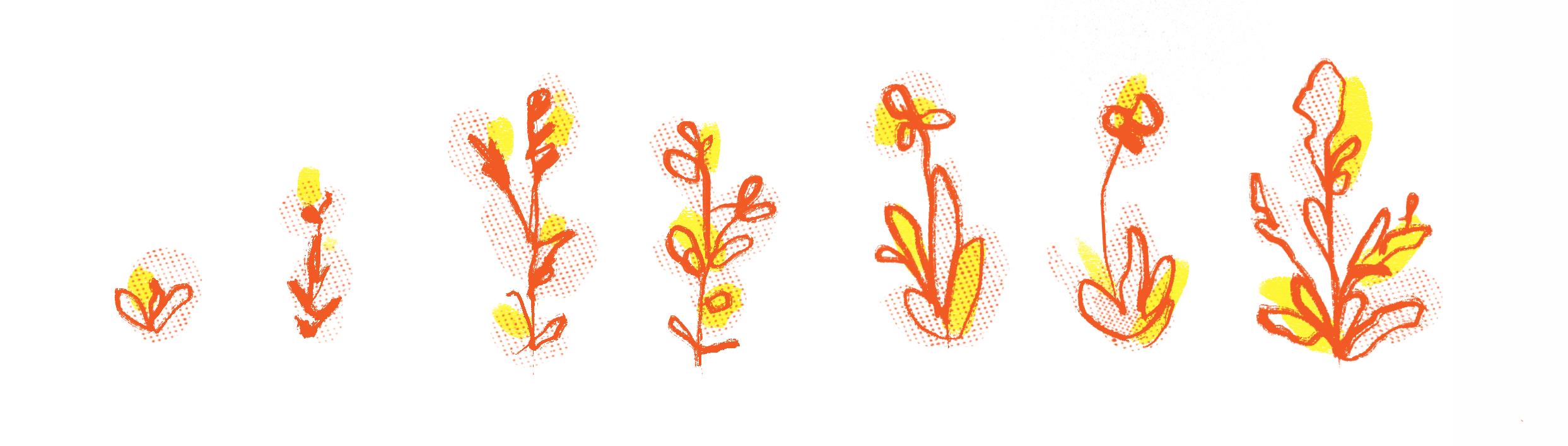 Sisuisa kukat