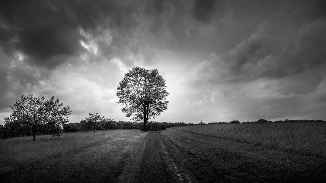 A lone tree in silhouette after a spring storm.