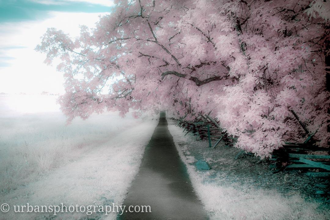 Dreamy Virginia Path