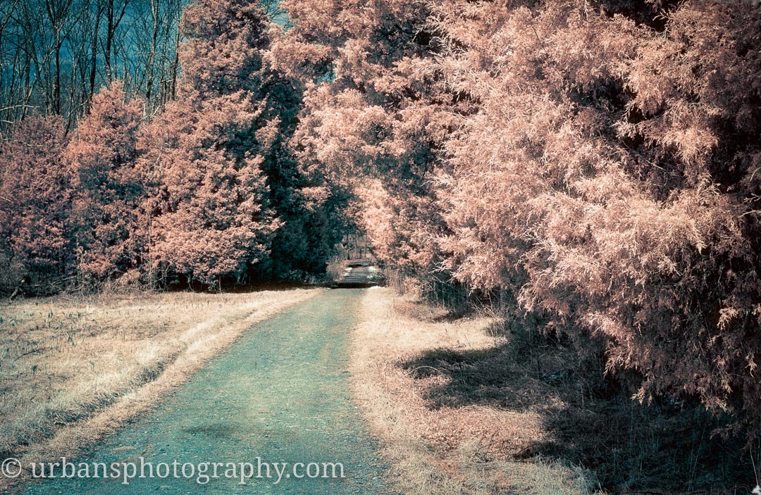 The path back from the Spangler farm in Gettysburg shot in infrared.