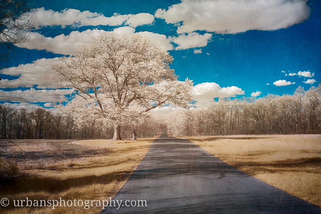 An infrared lone tree along Confederate ave.