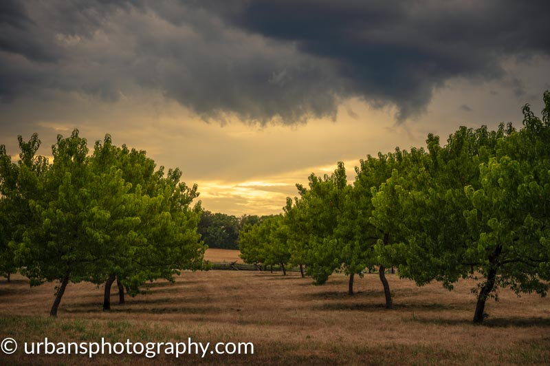 Stormy Orchard in Gettysburg