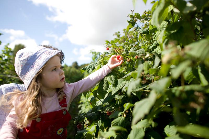 craigies farm edinburgh pick your own fruit