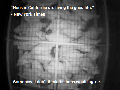 California's Prop 2 in action. According to the New York Times, the hens are