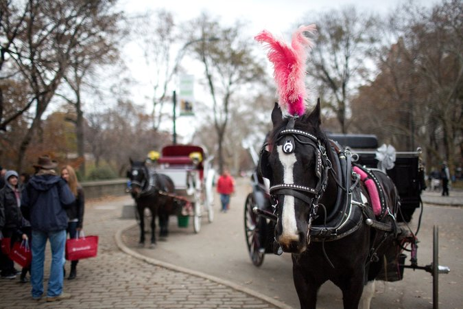 Waiting for customers on Monday at Grand Army Plaza, near Central Park. A bill would ban horse-drawn carriages by mid-2016. Kirsten Luce for  The New York Times
