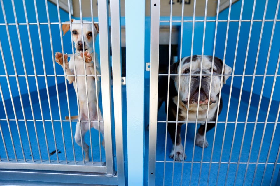Dogs at an LA animal shelter.
