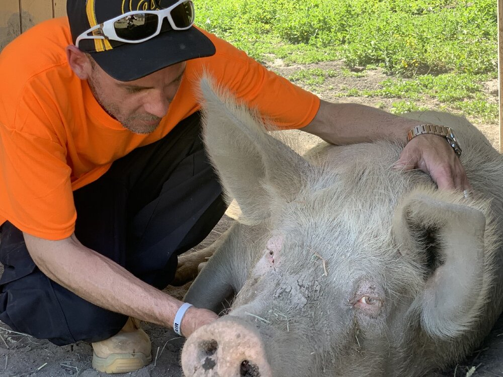 Bradley Johnson with a rescued pig living at a farmed animal sanctuary.